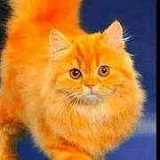 Оксана Малинина) Сухова on My World.