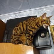 Владимир Нетишин on My World.